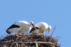 storch_006-4