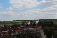beringung-wittelshofen_30-05-2019_005