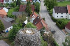 beringung-wittelshofen_30-05-2019_008